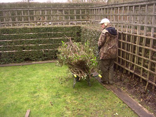 le blog du jardinier du prieur d 39 orsan if yew taxus. Black Bedroom Furniture Sets. Home Design Ideas