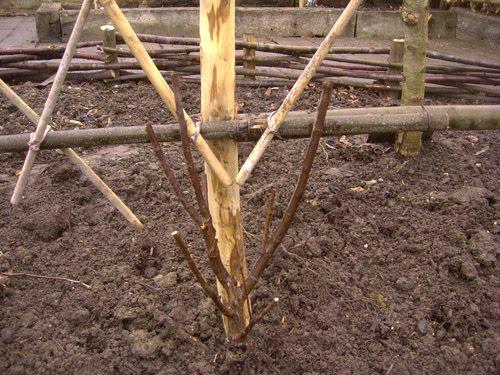 Le blog du jardinier du prieur d 39 orsan s rie noire - Detruire souche arbre rapidement ...