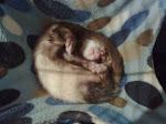 Micho el dormilón