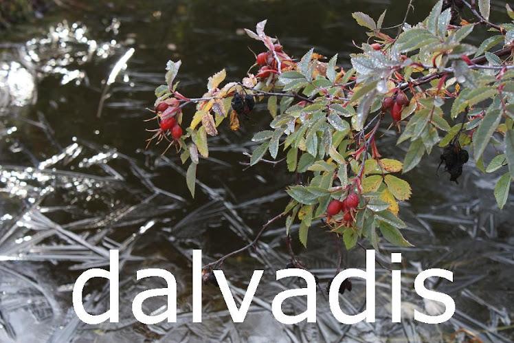 DALVADIS