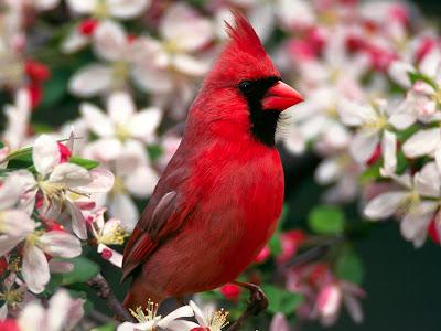 Exotic BIRDS !!!