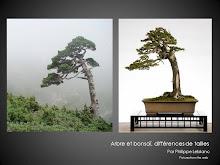 Des arbres avec de vrais morceaux de bonsaï dedans