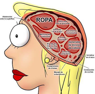 El cerebro de una mujer