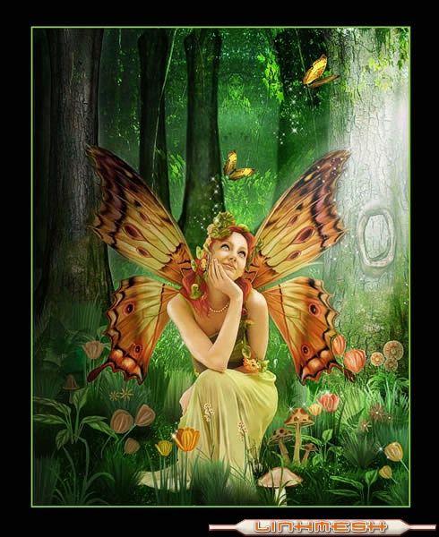 grupo mariposas