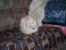 Fofinha a minha gatinha