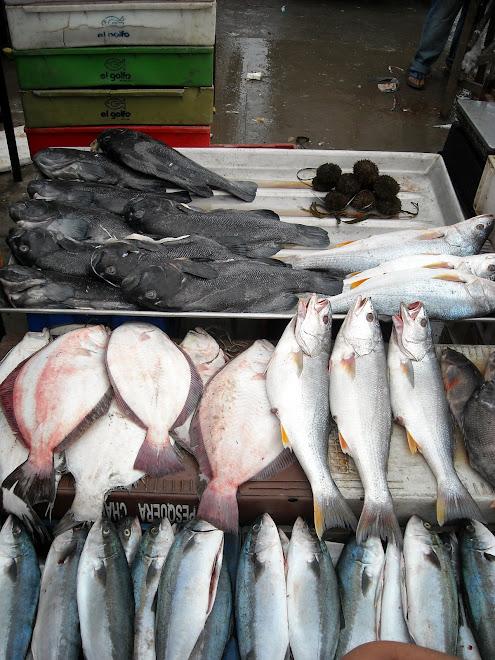 Productos del mar, Caleta Portales, Valparaíso, Chile