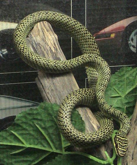 Ini dia 10 Jenis ular langka yang mengagumkan