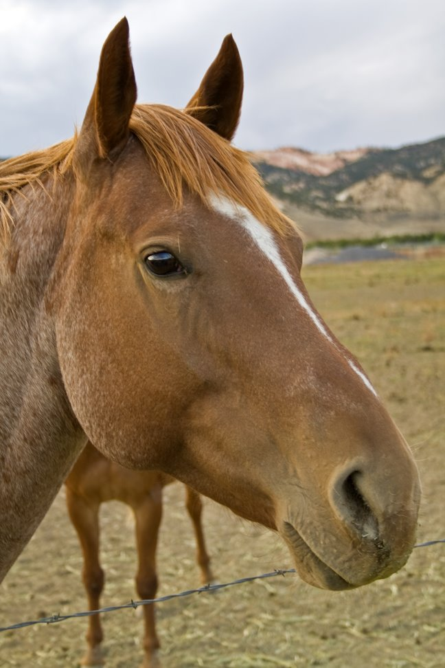 [HorseHead]