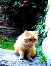 Garfield en Real Life