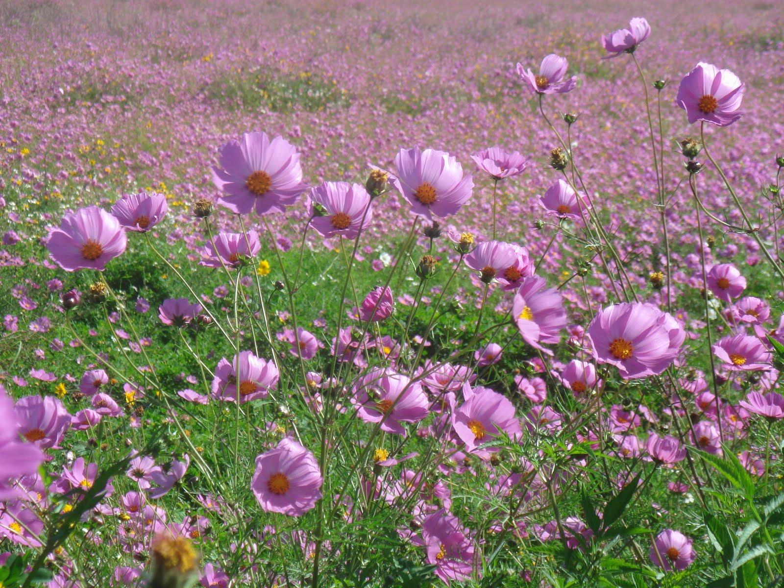 Flores Silvestres De Mexico