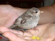 """""""Más vale pájaro volando que ciento en la mano"""" (José Bergamín)"""