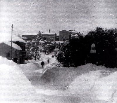 Ostra,1929,nevone