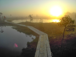 immanquqbles-estonie