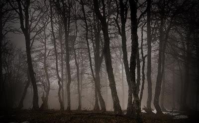 Valle de los Muertos Bosque