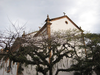 Mossy tree in front of church in Paraty.
