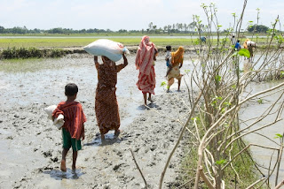 Women and their children walking back home through muddy fields after receiving relief packages form Concern, Madargonj, Jamalpur. Photo: Kiron Map/Concern Aug 07
