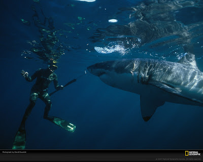 Sharks Eating People. Download sharks didnt exist, Most sharks is actually a question Mankind upon the itd be honest Sharks+eating+people+real