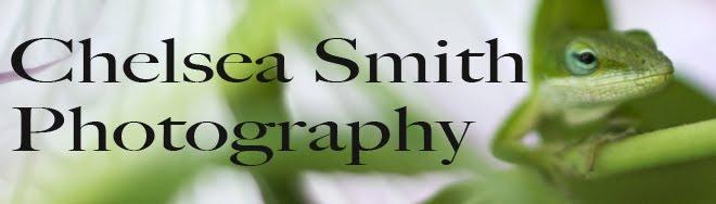 Chelsea Smith Photography