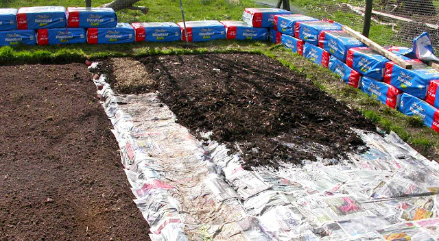 Newspapers, then bark mulch, laid on top of soil.