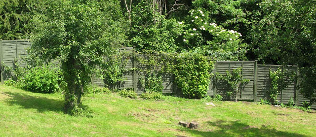 Green-pained panel fence with shrubs in front.