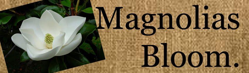 Magnolias Bloom