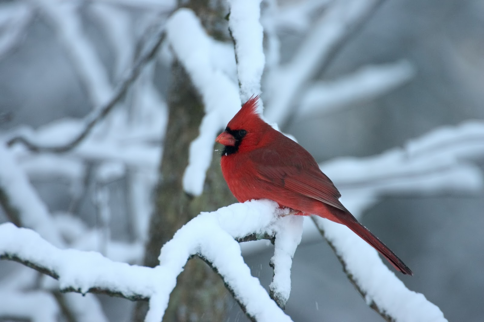 Nature Canada Blog  December 2010