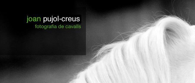 fotografia de cavalls