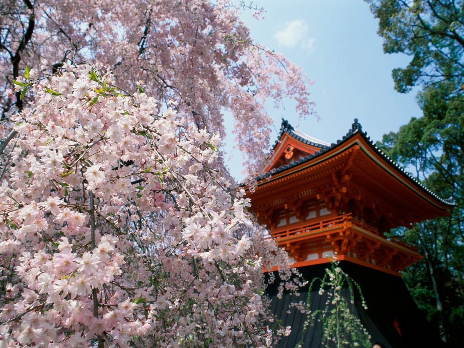 http://2.bp.blogspot.com/_708_wIdtSh0/S_5iQsuD5FI/AAAAAAAABEY/pKi0RULJmxY/s1600/Cherry+Blossoms,+Ninnaji+Temple,+Kyoto,+Japan.jpg