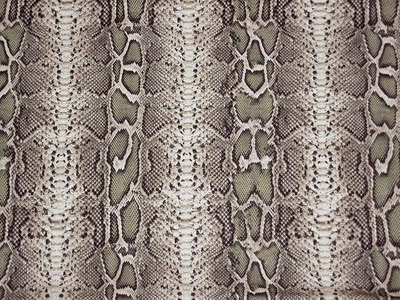 Snake Skin, Amazing Snake Skin Pictures and Images