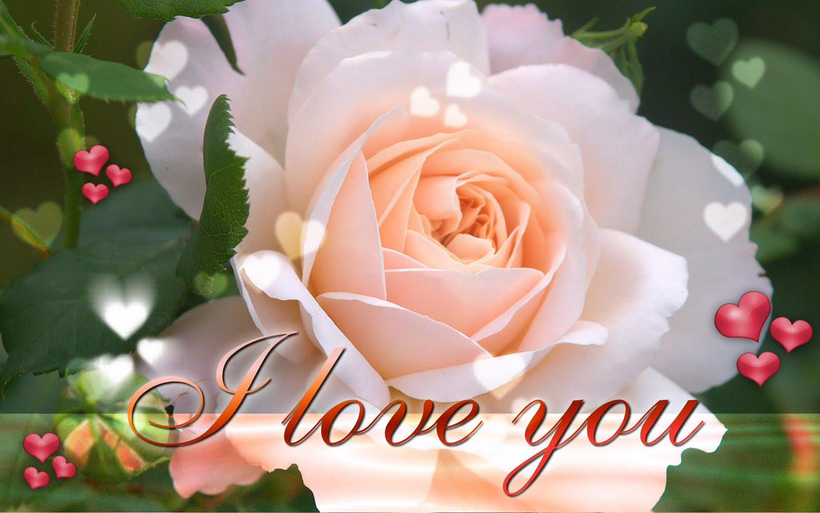 http://2.bp.blogspot.com/_71FCCUE5x3g/S9o8inMfryI/AAAAAAAAAHA/0Bb6vHttPGk/s1600/i-love-you-ecard-wallpaper-22.jpg