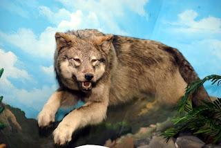 http://2.bp.blogspot.com/_71QbTOr9ASo/TBQ04iEtcfI/AAAAAAAAARg/A9kNLLCe9qk/s1600/serigala+lapar.jpg
