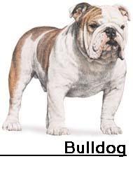 Trainable Dog Breeds Uk