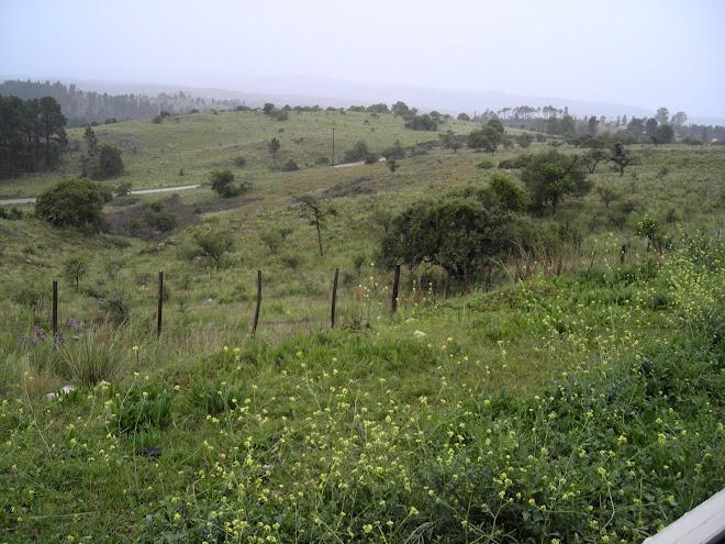 Camino a Villa General Belgrano
