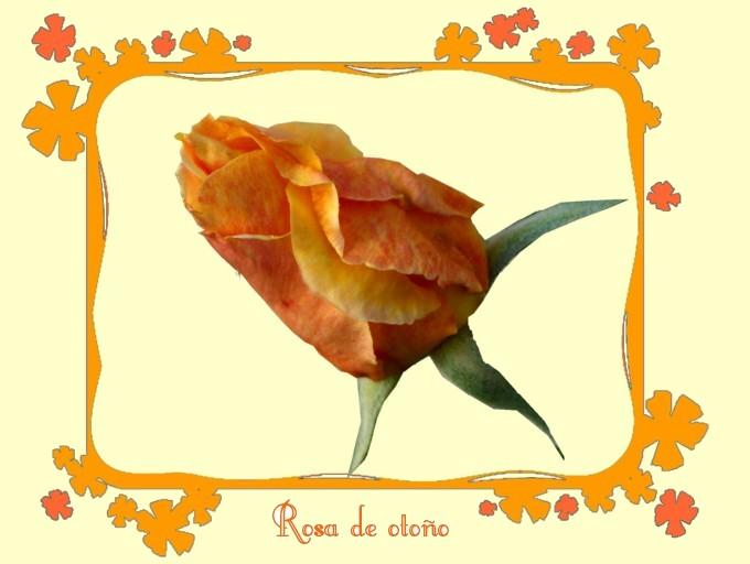 [Rosa+de+otoño.jpg]