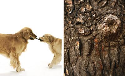 dog photographer sharon montrose