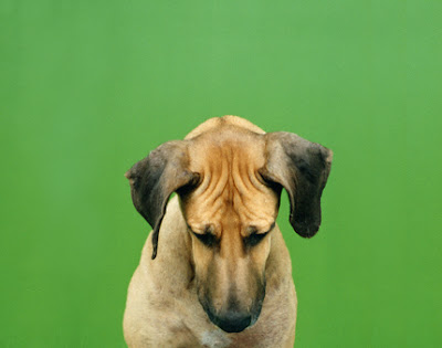 dog photographer sharon montrose