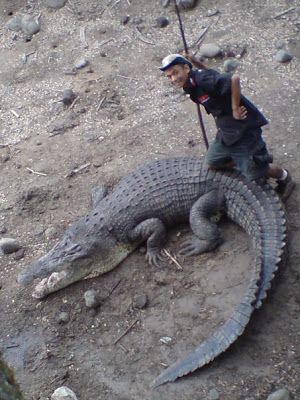 foto ular berbisa - gambar binatang - foto ular berbisa