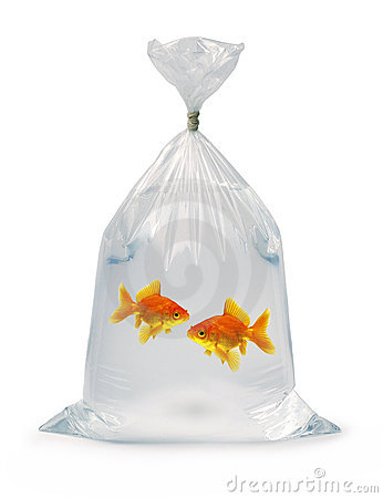 Read pole right wing fish tank for Fish in a bag