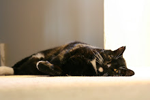 Cat Model?