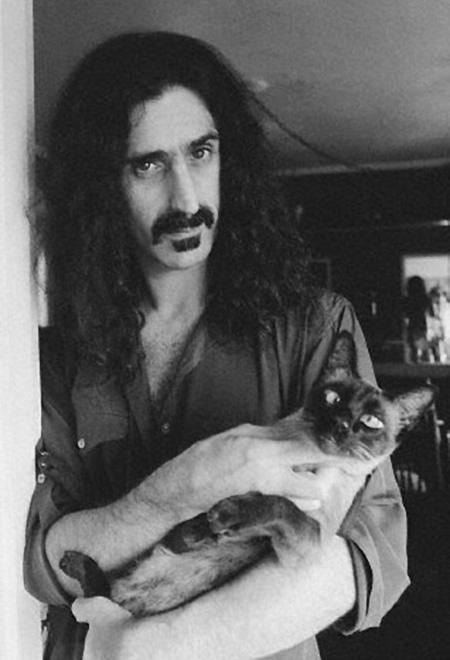 Gatto che non si fida di Frank Zappa