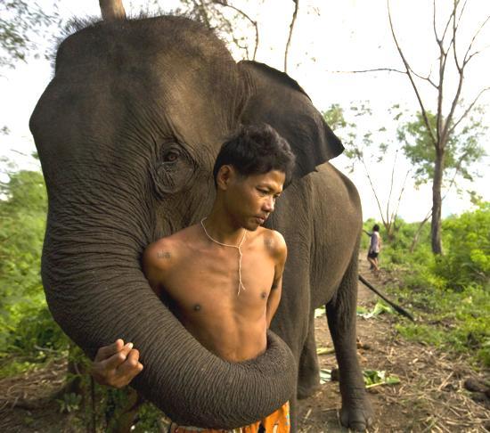 Elefante che non vuole partire