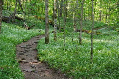 Porters Creek Trail, by Joe Strickland