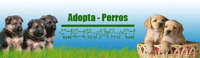 Adopta Perros
