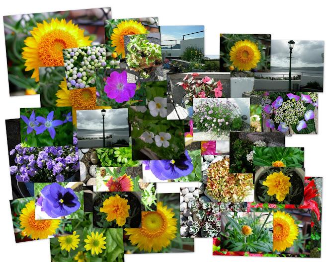 Litt av vår hage -07
