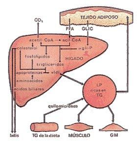 remedios para curar el acido urico alto remedios naturales para controlar el acido urico alto como eliminar el acido urico para siempre