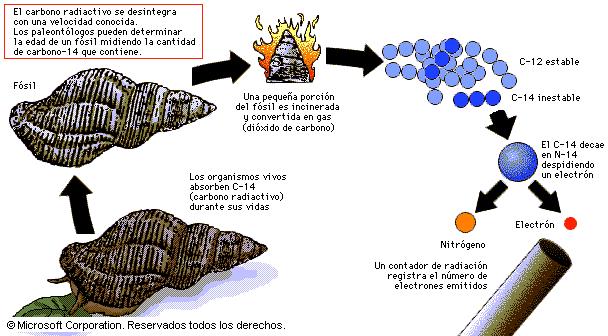 carbono en los fosiles