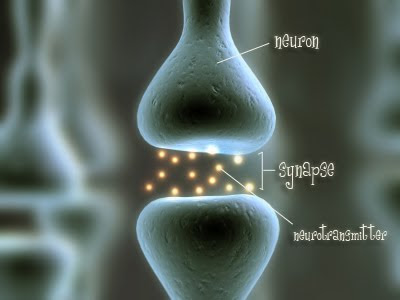Neurons In Brain. between neurons or rain