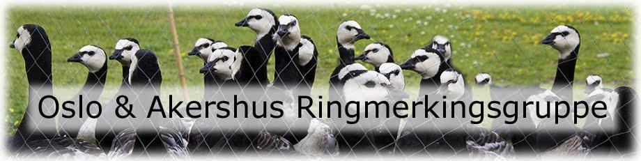 Oslo & Akershus Ringmerkingsgruppe