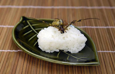 The national guard association of the united state japanese weird recipe book says that spiders are presently his preferred dish gently boiled and served on a bed of rice the meat he said is soft and reminiscent forumfinder Images
