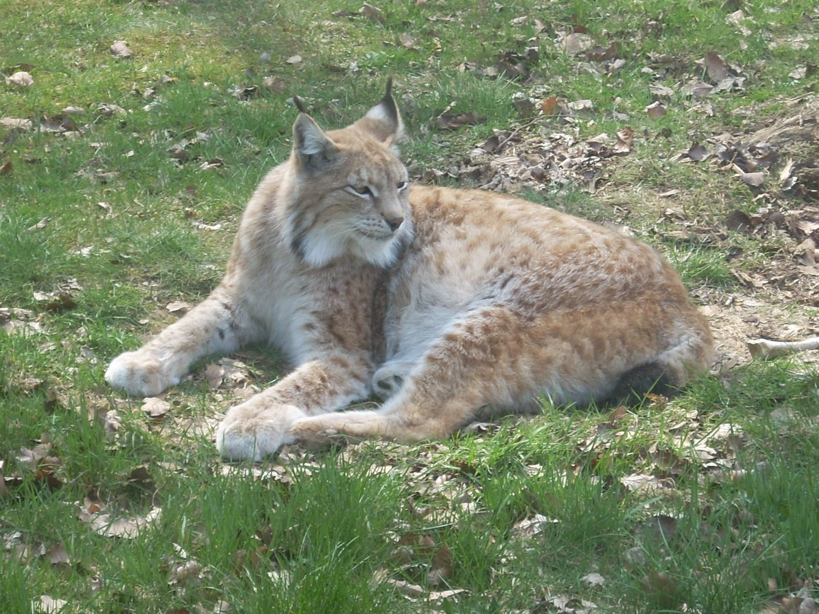Zona Kucing Penyakit Pada Kucing 1000 Fakta Unik Dan Menarik